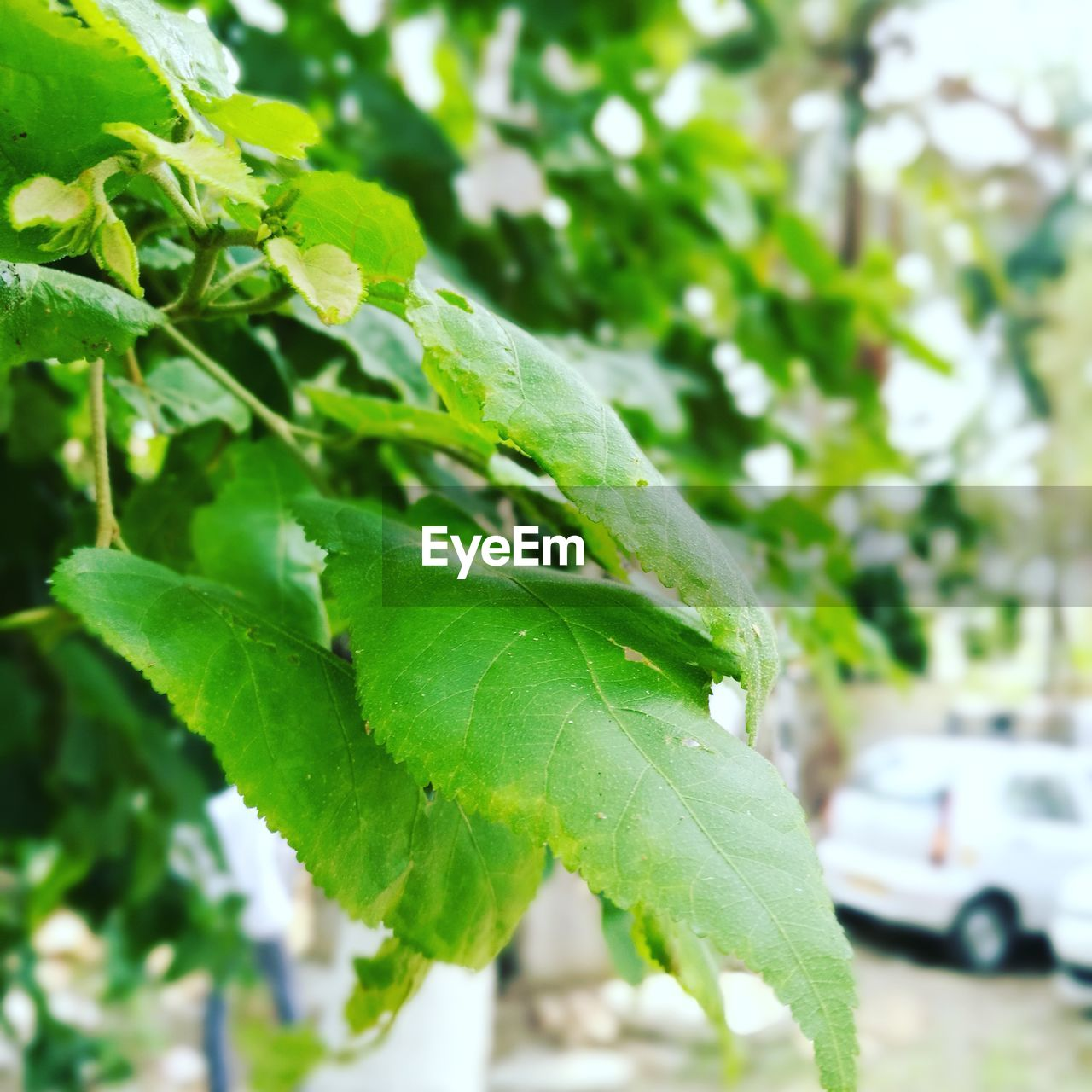 leaf, green color, growth, nature, plant, day, close-up, focus on foreground, outdoors, beauty in nature, no people, freshness