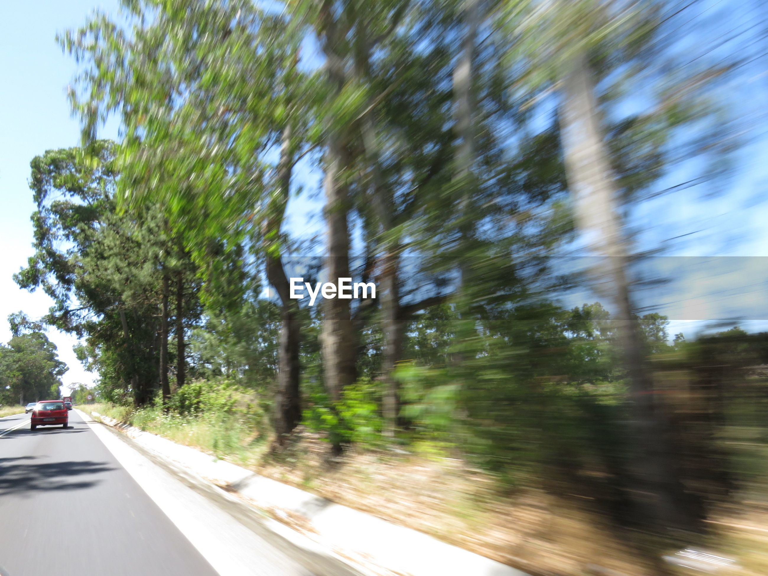 Blurred motion of trees