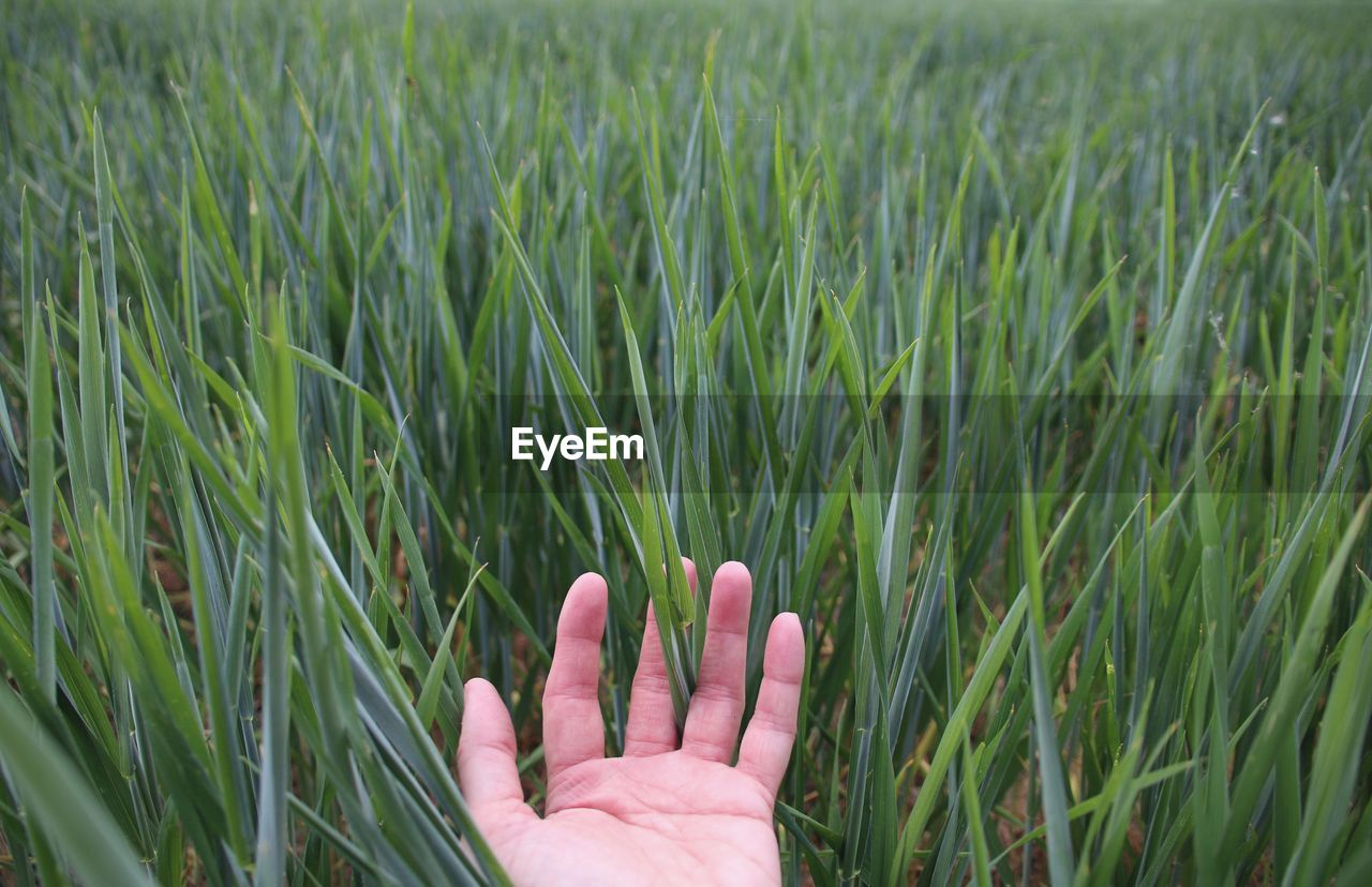 Cropped hand touching grass