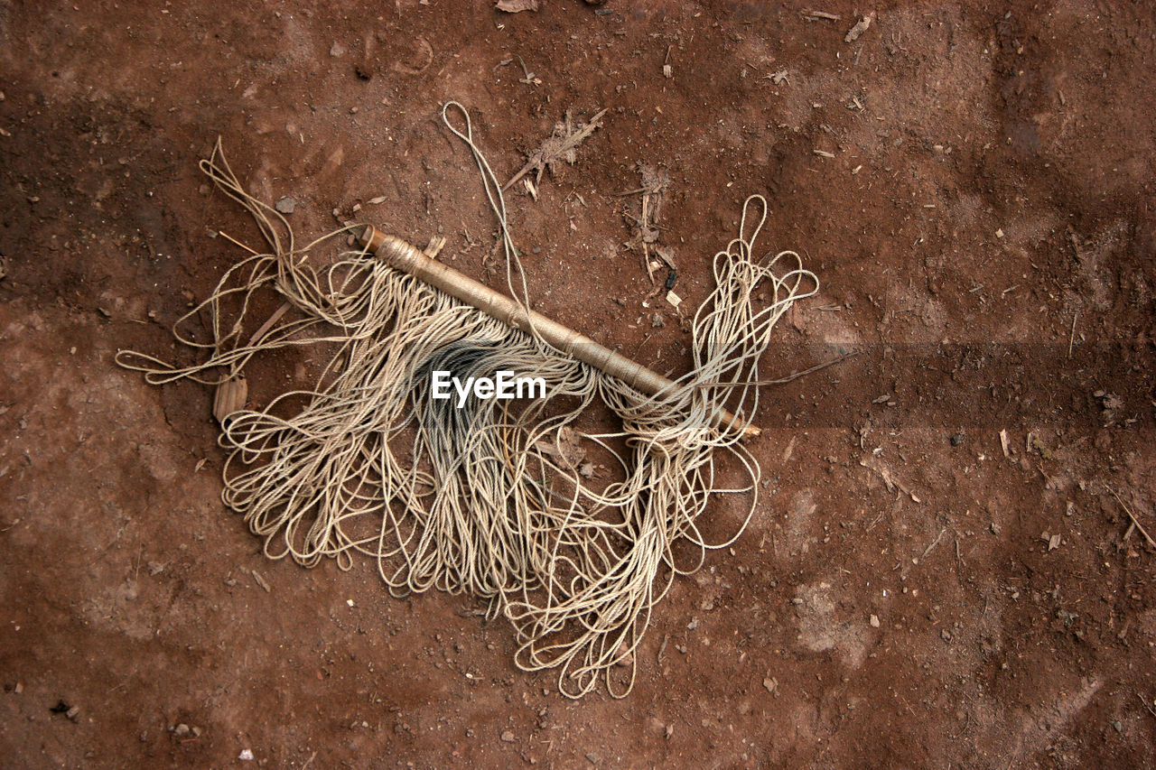 root, no people, plant, dried plant, close-up, outdoors, nature, day