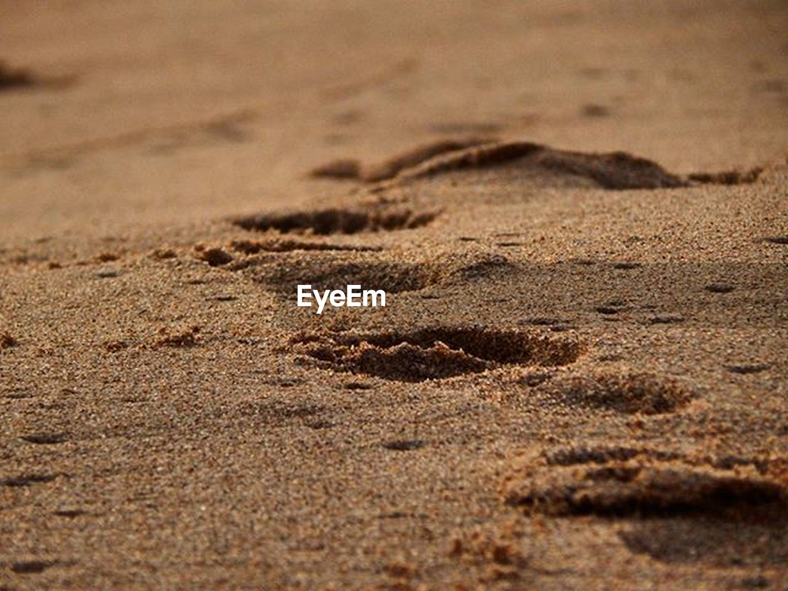 sand, beach, selective focus, surface level, shore, nature, tranquility, footprint, close-up, sunlight, textured, day, outdoors, no people, backgrounds, full frame, desert, high angle view, brown, natural pattern