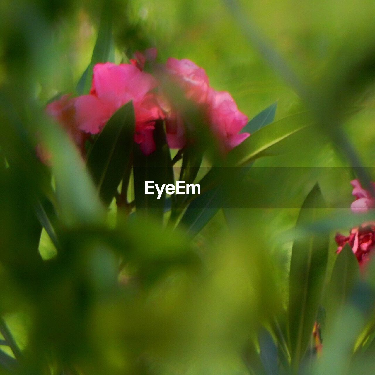 flower, growth, nature, plant, selective focus, beauty in nature, petal, red, no people, fragility, blooming, flower head, close-up, outdoors, freshness, day