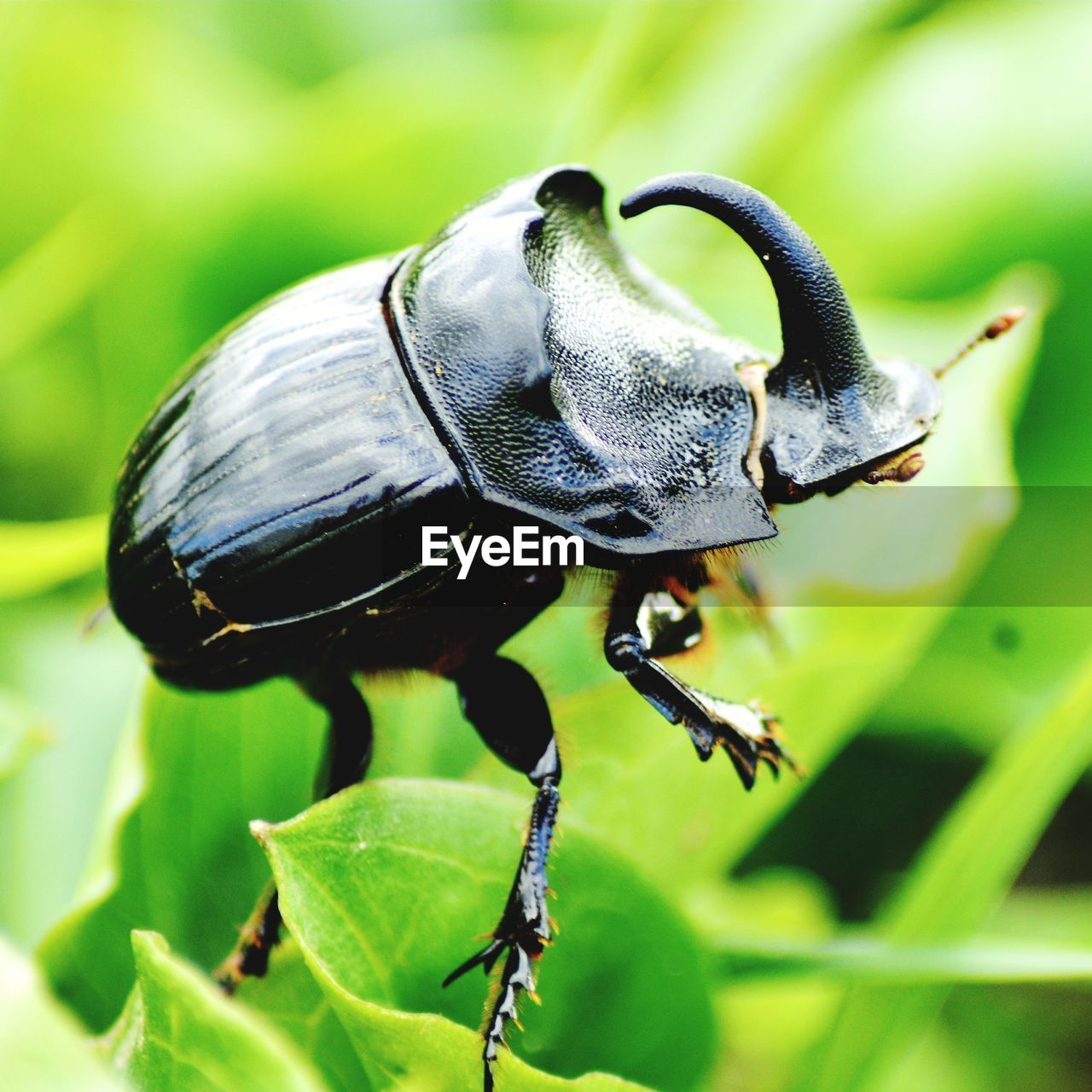 animal themes, animal, one animal, animals in the wild, animal wildlife, close-up, insect, plant part, invertebrate, leaf, focus on foreground, plant, green color, nature, no people, beetle, day, black color, beauty in nature, outdoors