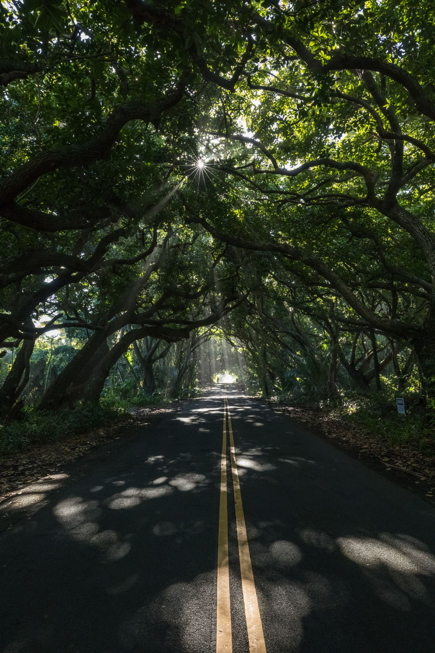 tree, plant, road, transportation, sunlight, direction, nature, the way forward, sign, road marking, growth, marking, symbol, day, shadow, no people, beauty in nature, green color, tranquility, diminishing perspective, outdoors, dividing line, long