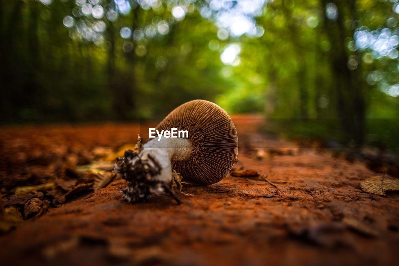 Close-Up Of Mushroom On Ground Against Blurred Trees