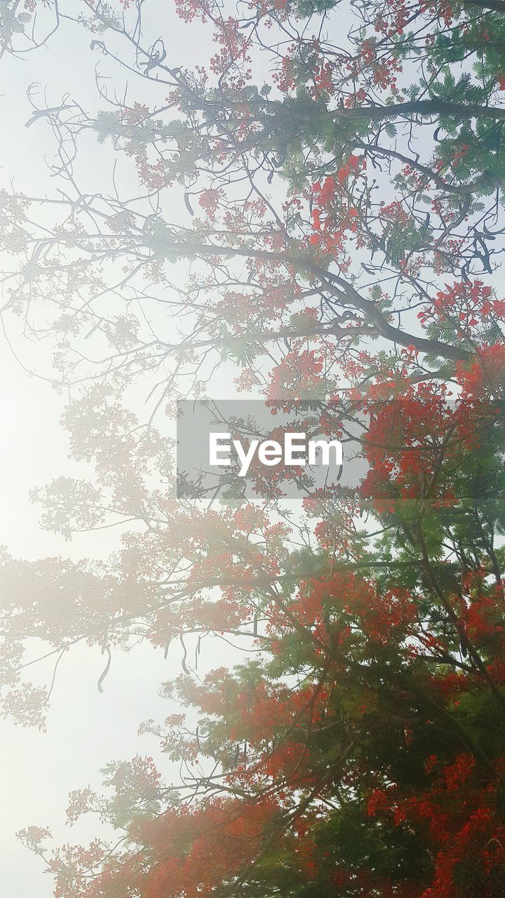 tree, low angle view, nature, growth, branch, beauty in nature, day, no people, outdoors, leaf, backgrounds, forest, sky, scenics, freshness