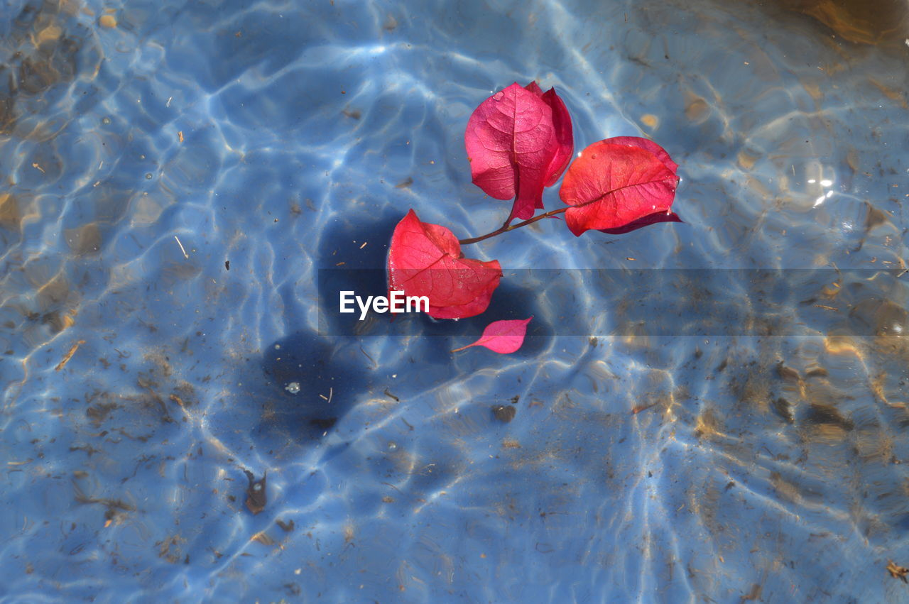 red, leaf, flower, nature, petal, high angle view, beauty in nature, no people, rose - flower, water, day, floating on water, outdoors, fragility, rose petals, close-up, freshness