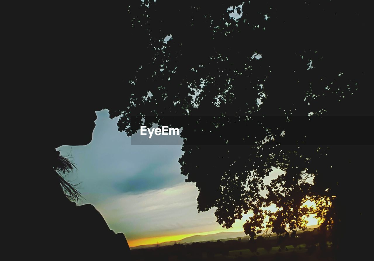 tree, silhouette, sky, nature, growth, beauty in nature, one person, outdoors, sunset, hope, day, close-up, people