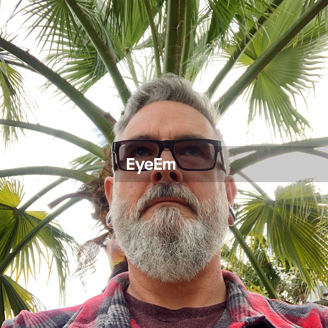 Close-up low angle view of thoughtful bearded man looking away against palm tree