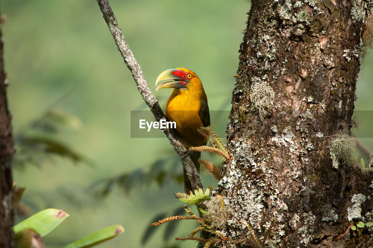 animal wildlife, animal themes, animals in the wild, animal, one animal, bird, vertebrate, perching, tree, plant, focus on foreground, branch, day, nature, tree trunk, trunk, no people, outdoors, beauty in nature, close-up