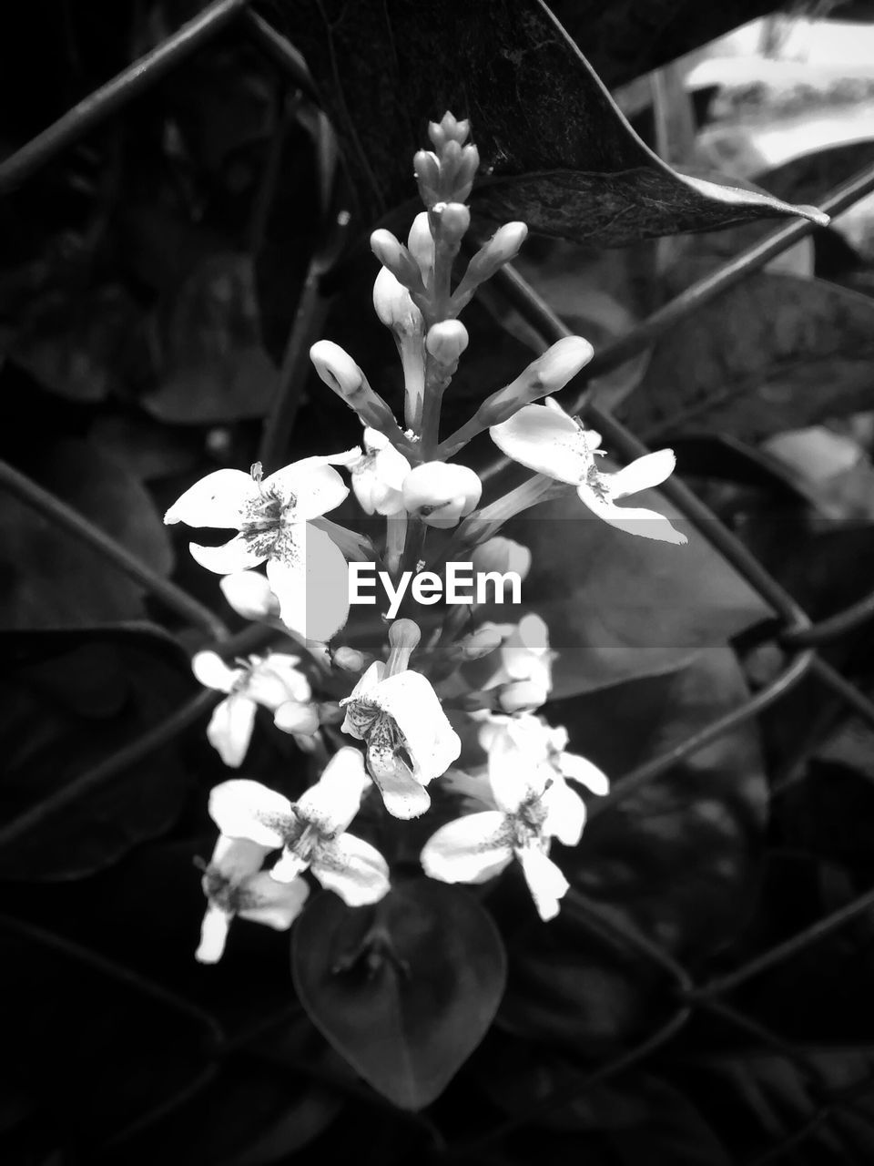 White Flower Growing Out Of Netting