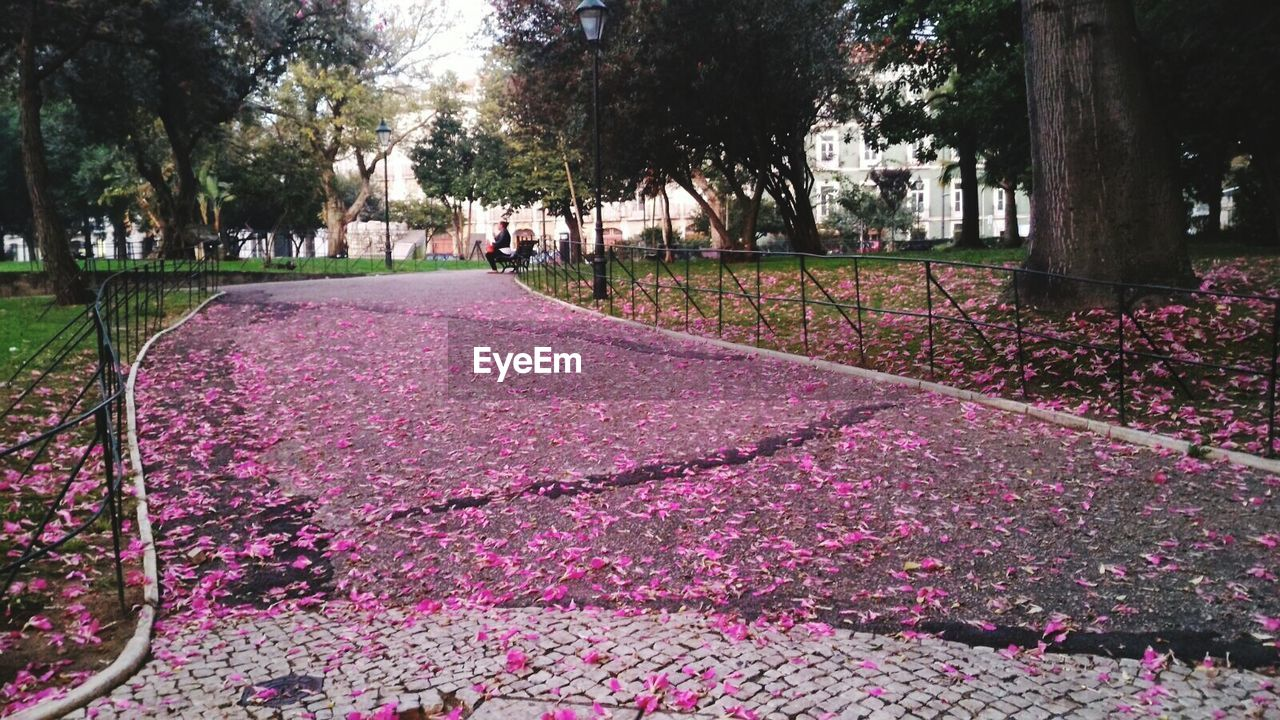 tree, flower, nature, growth, beauty in nature, tranquility, outdoors, park - man made space, day, pink color, petal, scenics, tranquil scene, tree trunk, plant, fragility, no people, landscape, freshness