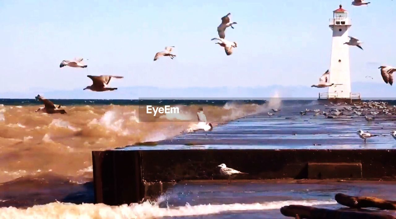 bird, animals in the wild, large group of animals, animal themes, flying, water, flock of birds, nature, animal wildlife, motion, beauty in nature, seagull, sky, spread wings, no people, sea, scenics, outdoors, day