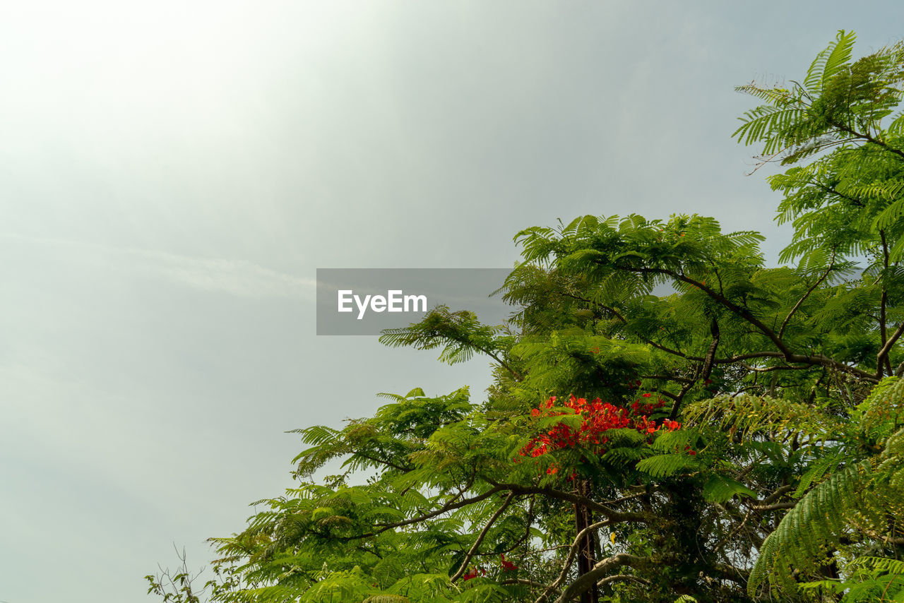 plant, tree, growth, beauty in nature, low angle view, nature, sky, day, green color, no people, outdoors, tranquility, flowering plant, flower, cloud - sky, freshness, tranquil scene, leaf, branch, vulnerability