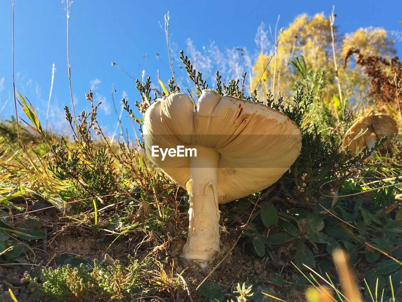 Close-Up Of Mushrooms Growing On Field Against Sky
