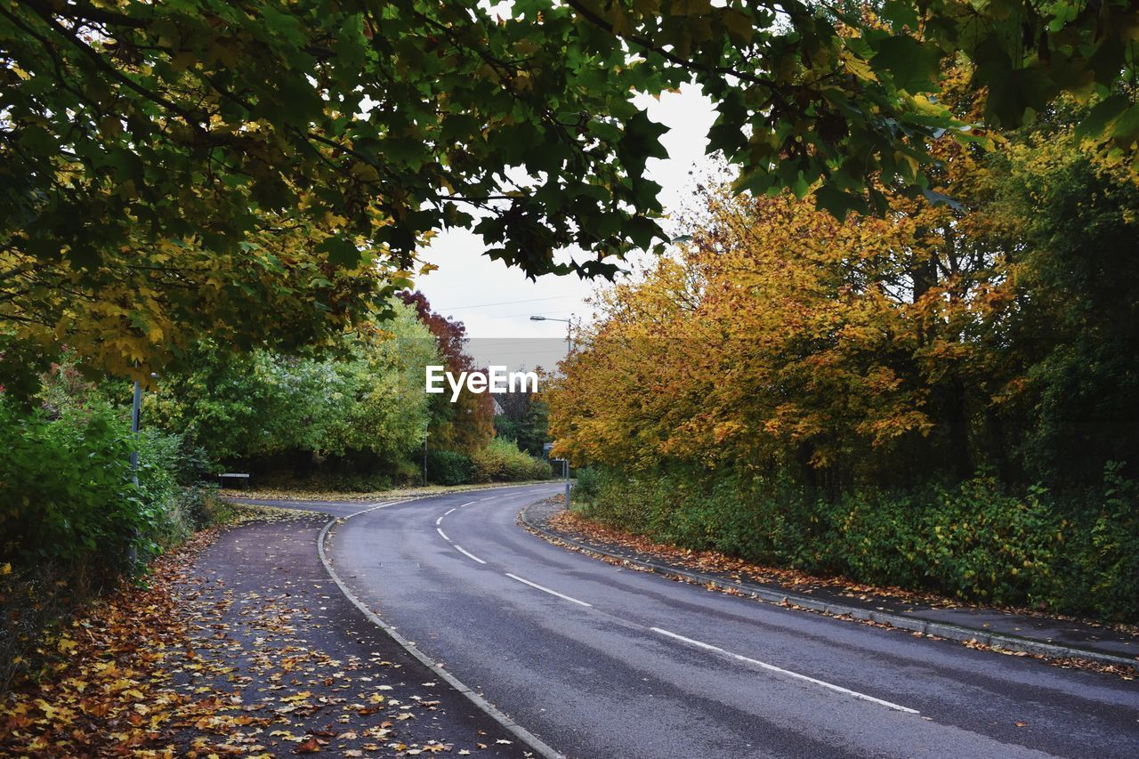 tree, road, autumn, the way forward, leaf, change, nature, tranquil scene, no people, day, tranquility, transportation, beauty in nature, scenics, growth, outdoors, landscape, branch, sky
