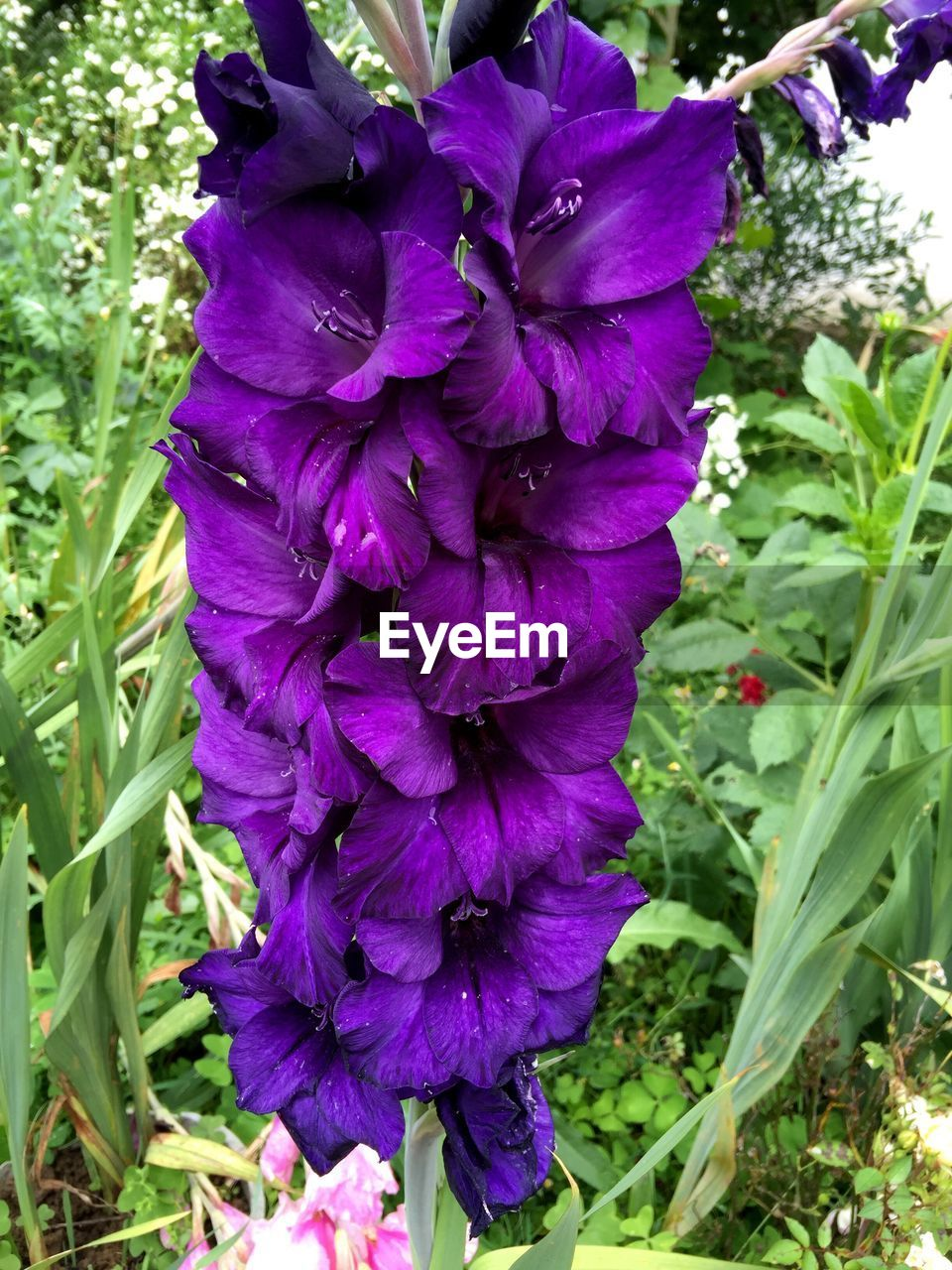 growth, flower, purple, nature, beauty in nature, fragility, freshness, petal, outdoors, plant, day, no people, blooming, flower head, close-up