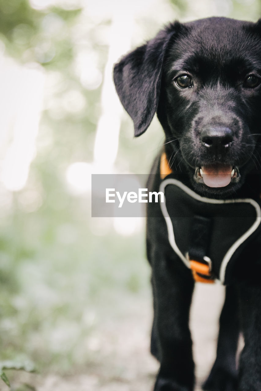 Portrait of black puppy standing on field