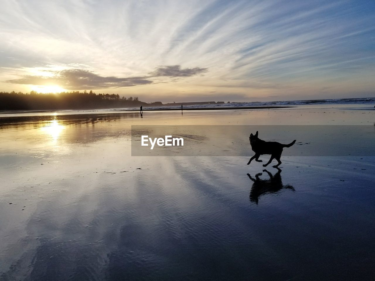 dog, domestic animals, pets, animal themes, sunset, water, sky, mammal, reflection, nature, cloud - sky, one animal, scenics, beach, beauty in nature, sea, outdoors, sand, silhouette, no people, horizon over water, day