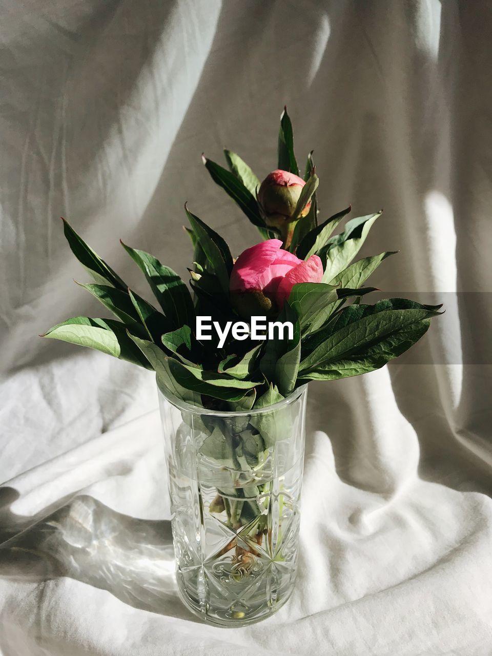 CLOSE-UP OF ROSE FLOWER IN VASE