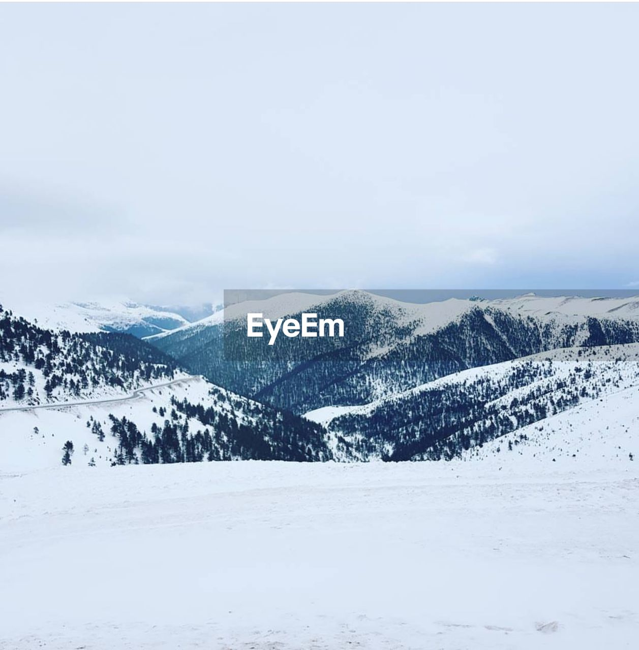 EyeEm Selects Snow Winter Mountain Cold Temperature Snowcapped Mountain Pinaceae Pine Tree