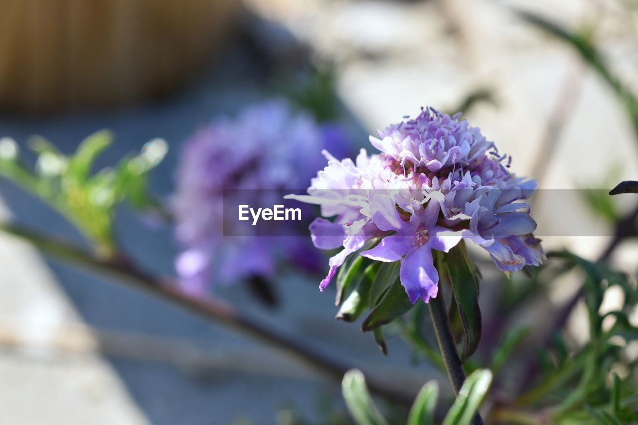 flower, flowering plant, vulnerability, plant, fragility, freshness, beauty in nature, purple, growth, petal, close-up, flower head, focus on foreground, nature, day, inflorescence, botany, no people, plant part, leaf, outdoors, bunch of flowers, lilac