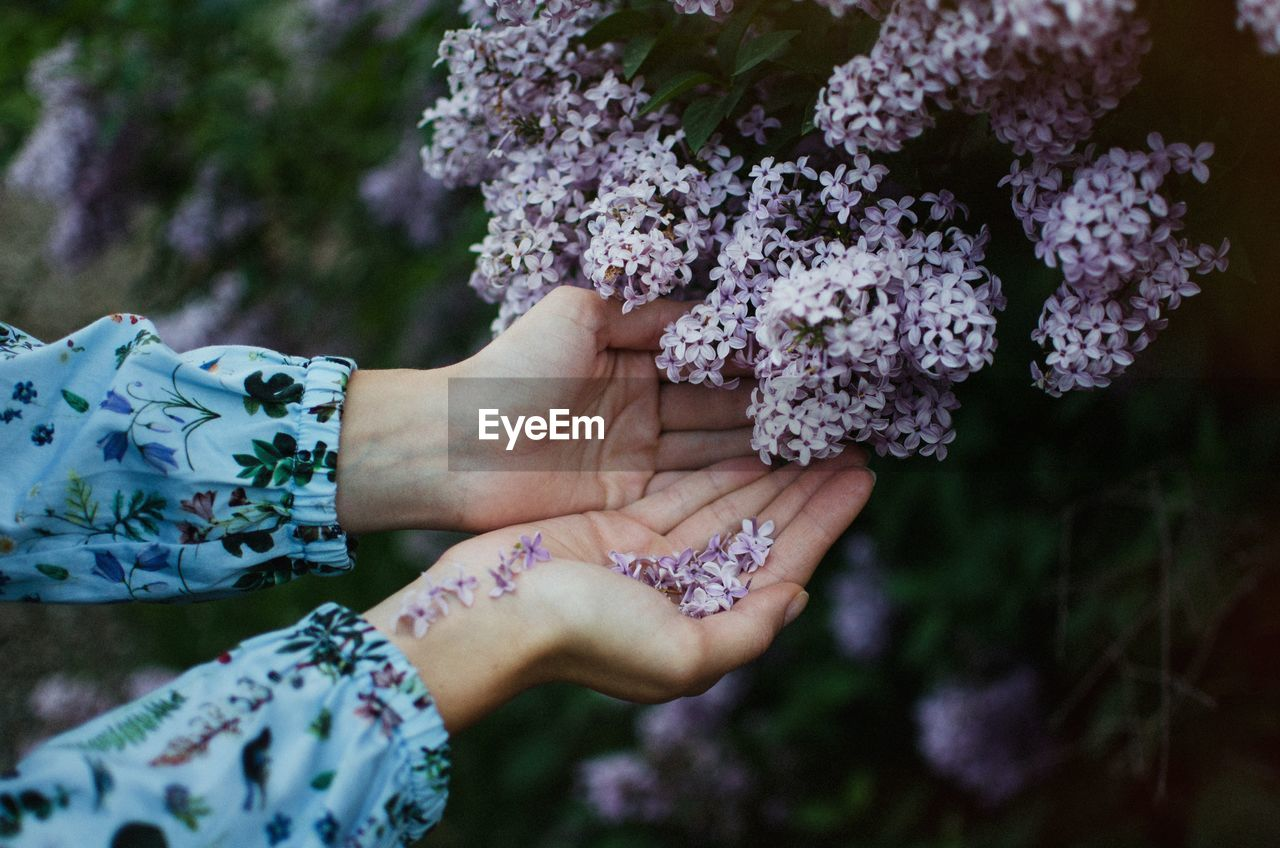 Cupped Hands Below Purple Flowers