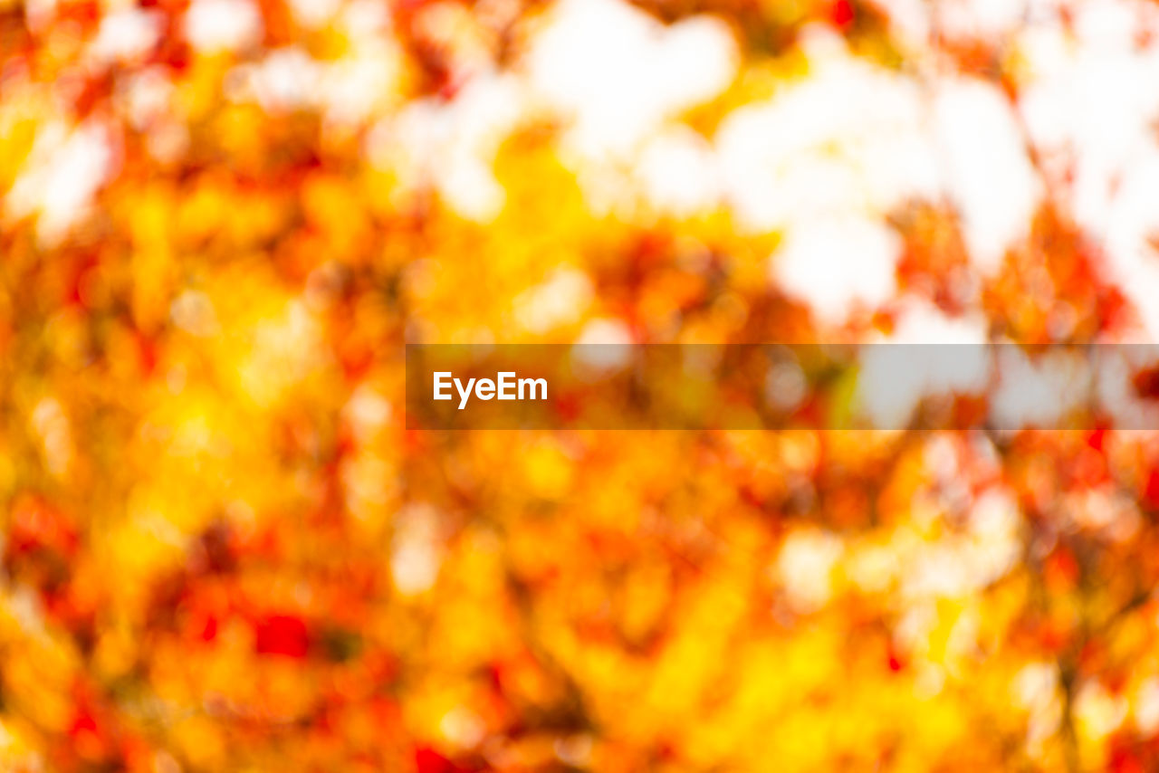 orange color, backgrounds, autumn, full frame, yellow, no people, beauty in nature, leaf, nature, change, plant part, tree, plant, day, outdoors, branch, close-up, tranquility, selective focus, abundance, maple leaf, leaves