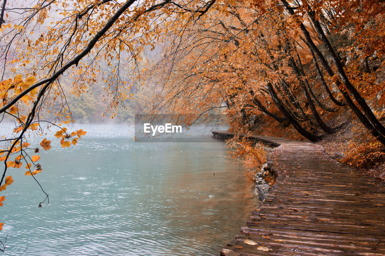 Boardwalk by trees and lake during autumn