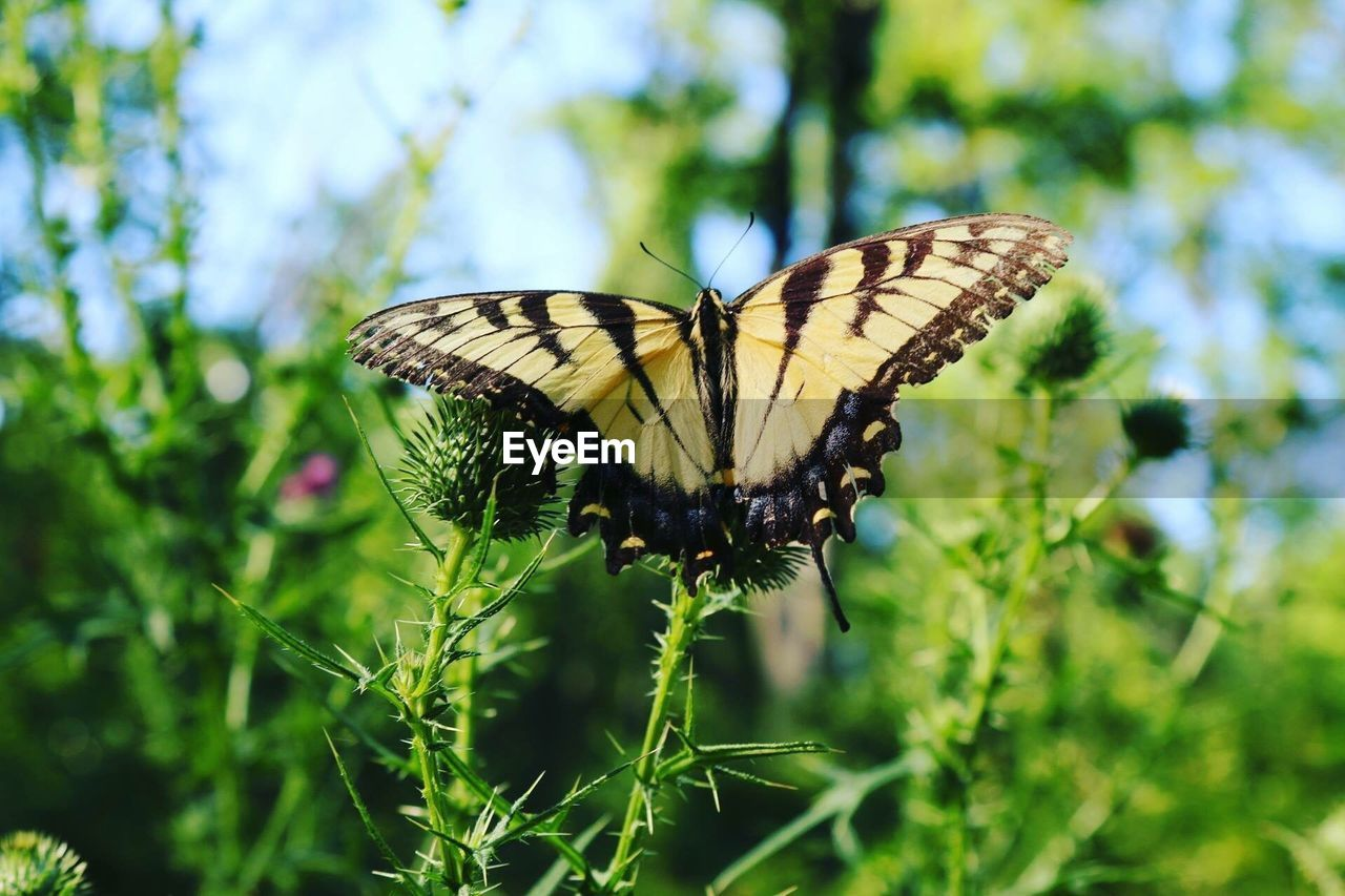 animal wing, insect, animal wildlife, invertebrate, butterfly - insect, animals in the wild, animal, animal themes, plant, one animal, beauty in nature, flower, growth, day, green color, close-up, nature, focus on foreground, no people, flowering plant, outdoors, butterfly, pollination