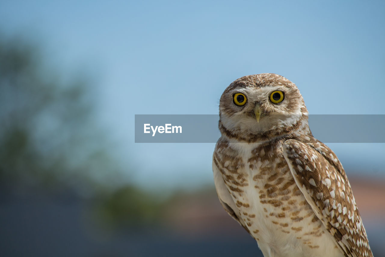 Close-up of owl perching against sky
