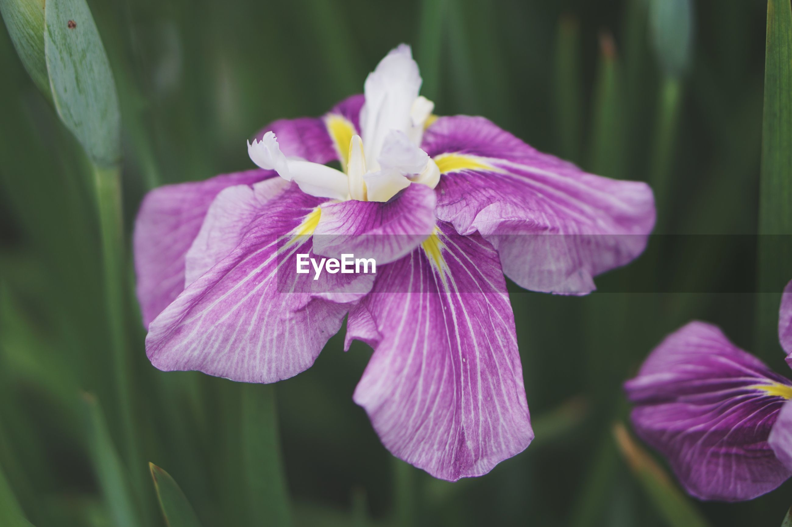 flowering plant, flower, vulnerability, fragility, plant, petal, freshness, beauty in nature, inflorescence, flower head, close-up, growth, purple, no people, nature, focus on foreground, day, outdoors, plant part, iris - plant