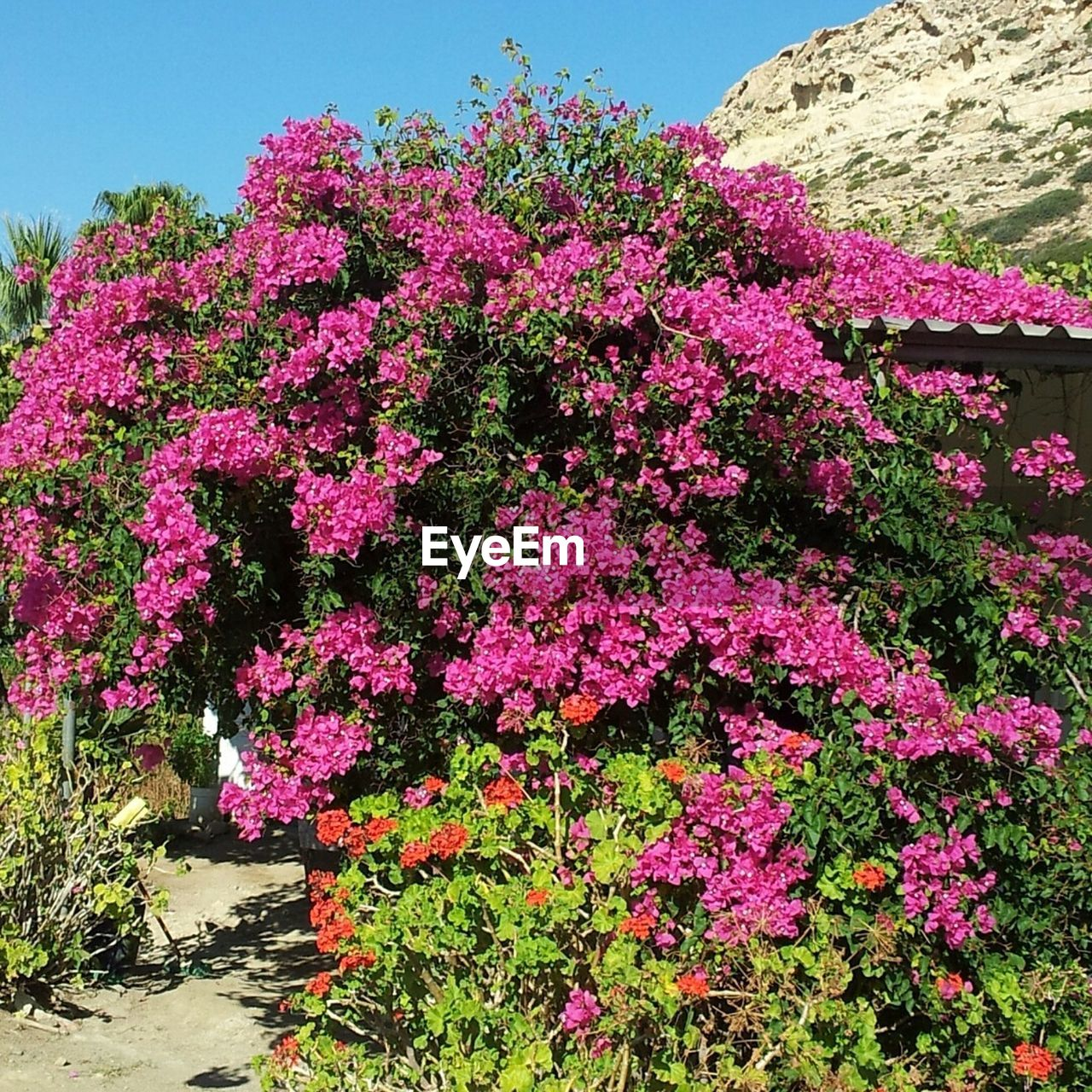 flower, growth, pink color, plant, nature, beauty in nature, outdoors, blooming, day, no people, freshness