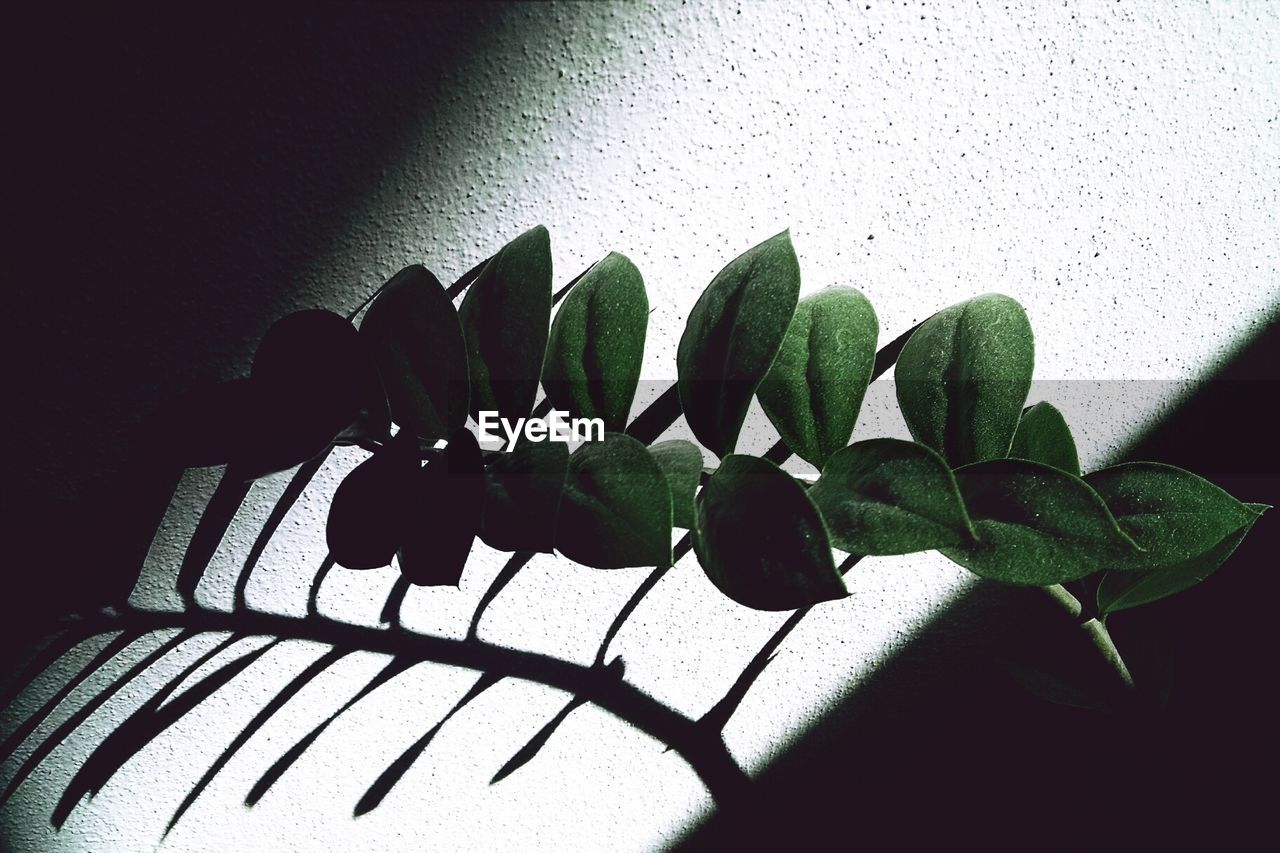 Close-up of sunlight falling on plant against wall