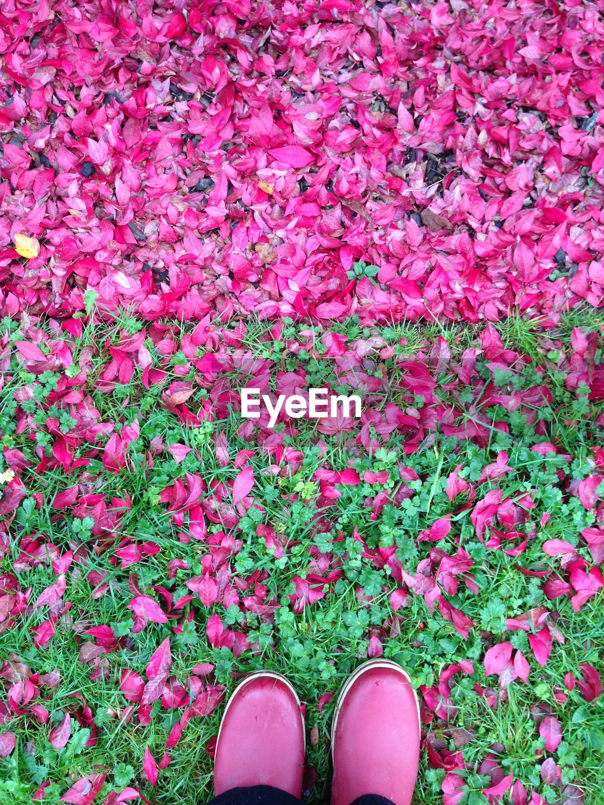 Shoes on pink blooming flowers