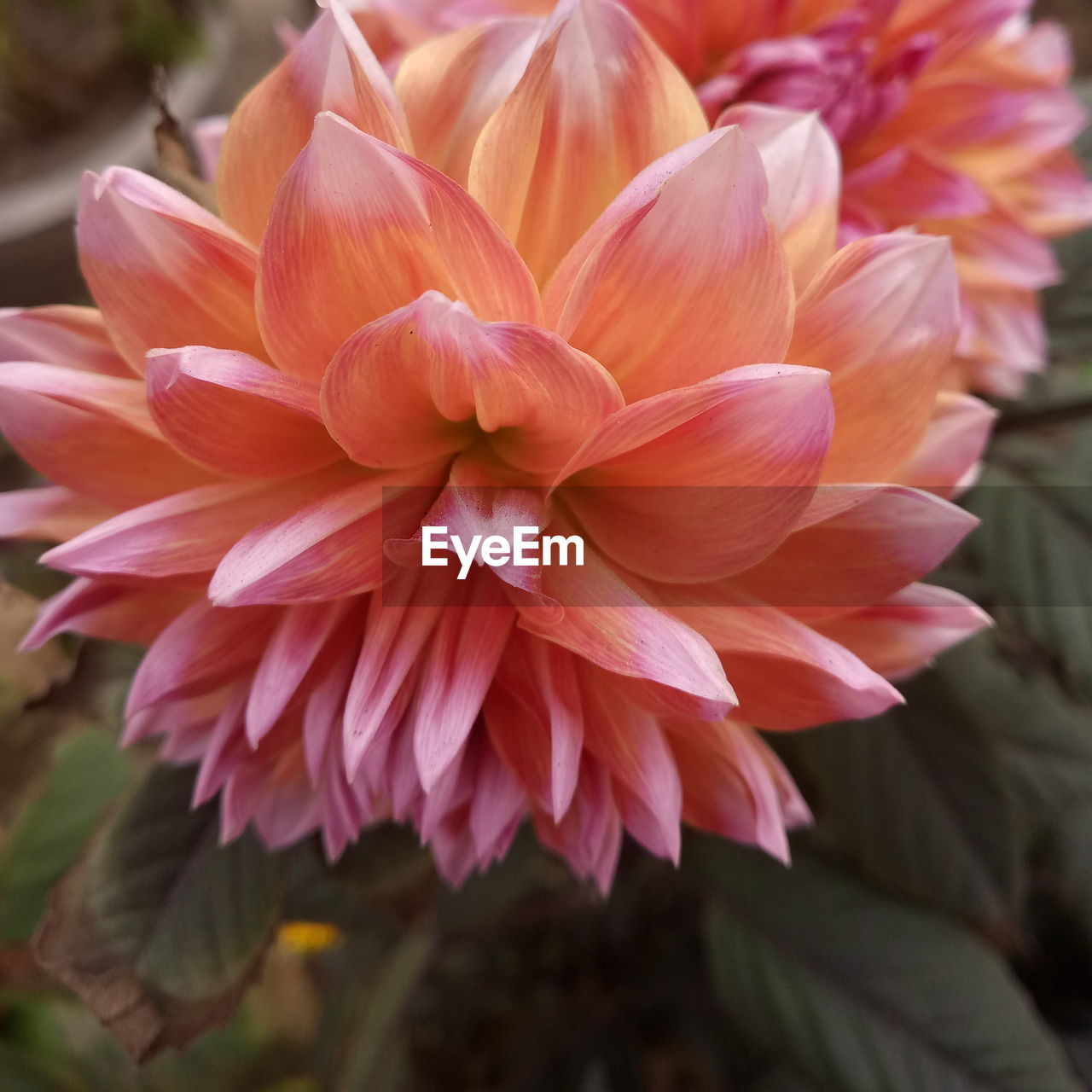 flower, petal, nature, beauty in nature, flower head, fragility, close-up, freshness, growth, focus on foreground, no people, plant, blooming, outdoors, day