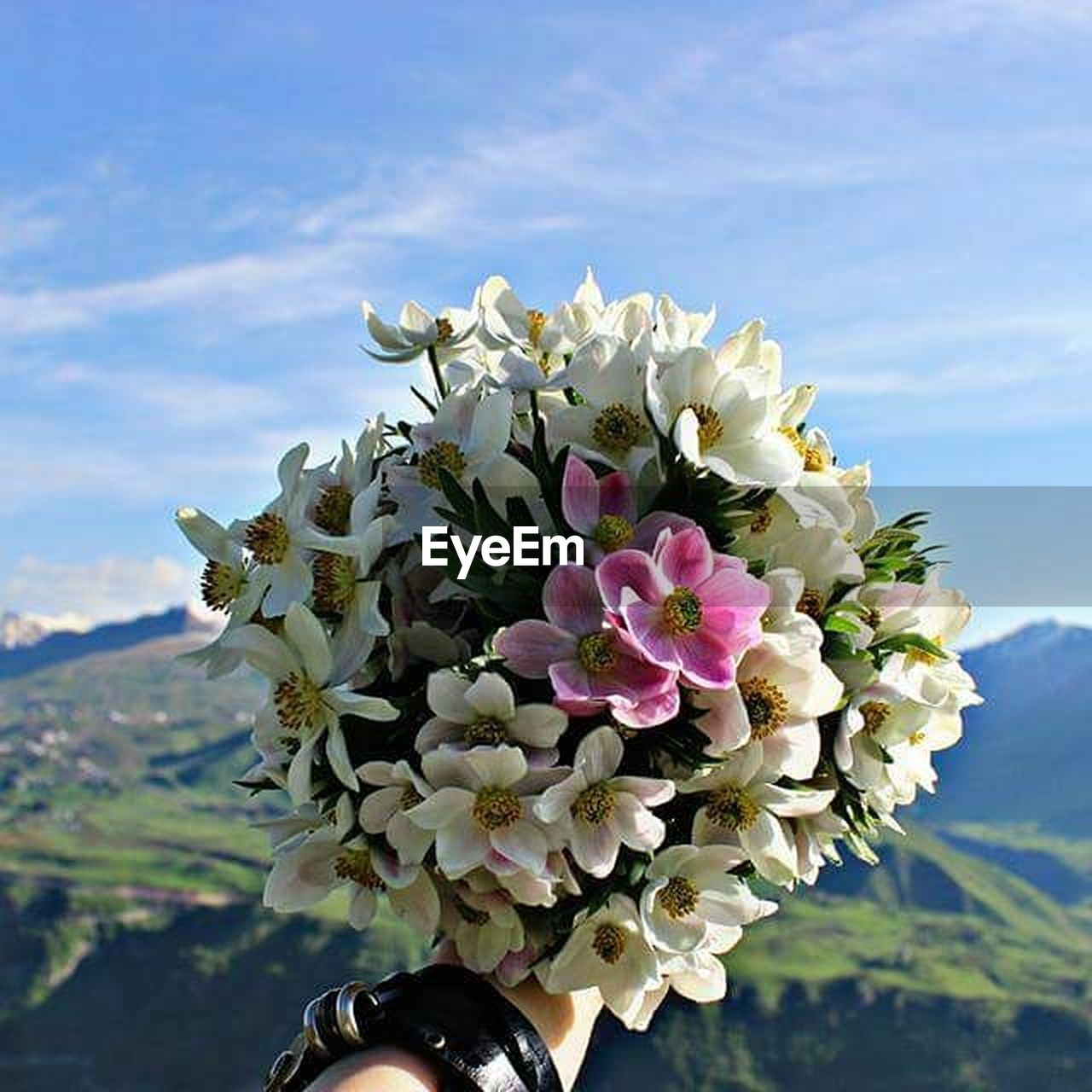 flower, petal, nature, fragility, beauty in nature, flower head, freshness, day, close-up, outdoors, sky, bouquet, mountain, cloud - sky, growth, blooming, no people