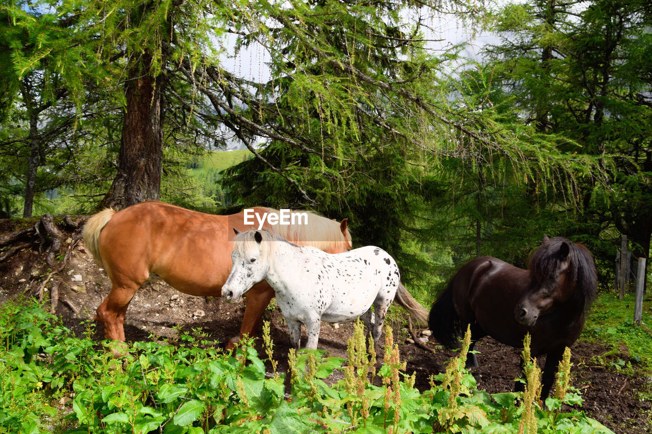 HORSES STANDING IN THE GROUND