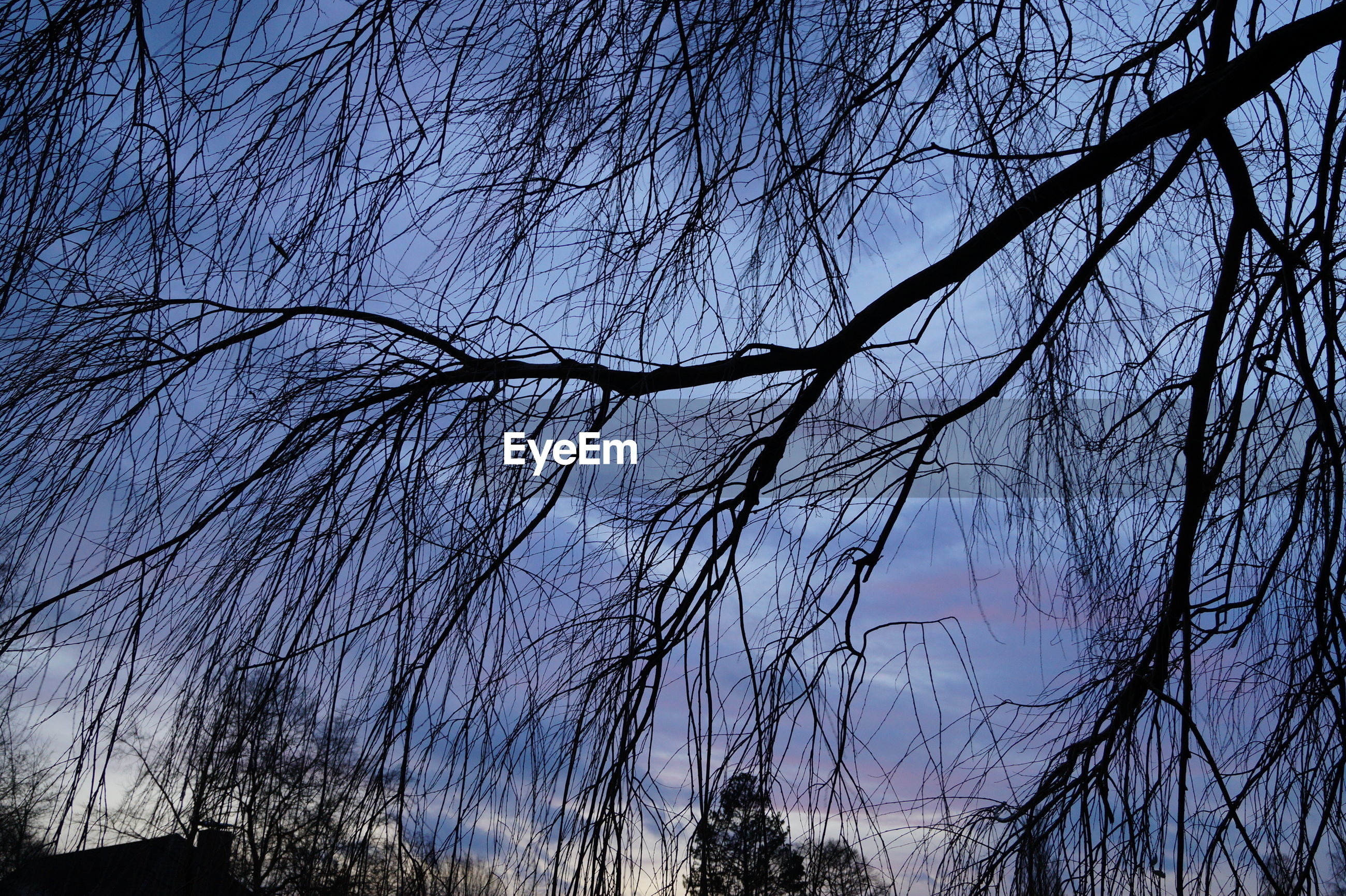 bare tree, low angle view, branch, tree, blue, silhouette, sky, clear sky, nature, tranquility, beauty in nature, growth, outdoors, no people, scenics, dusk, day, high section, sunlight, built structure