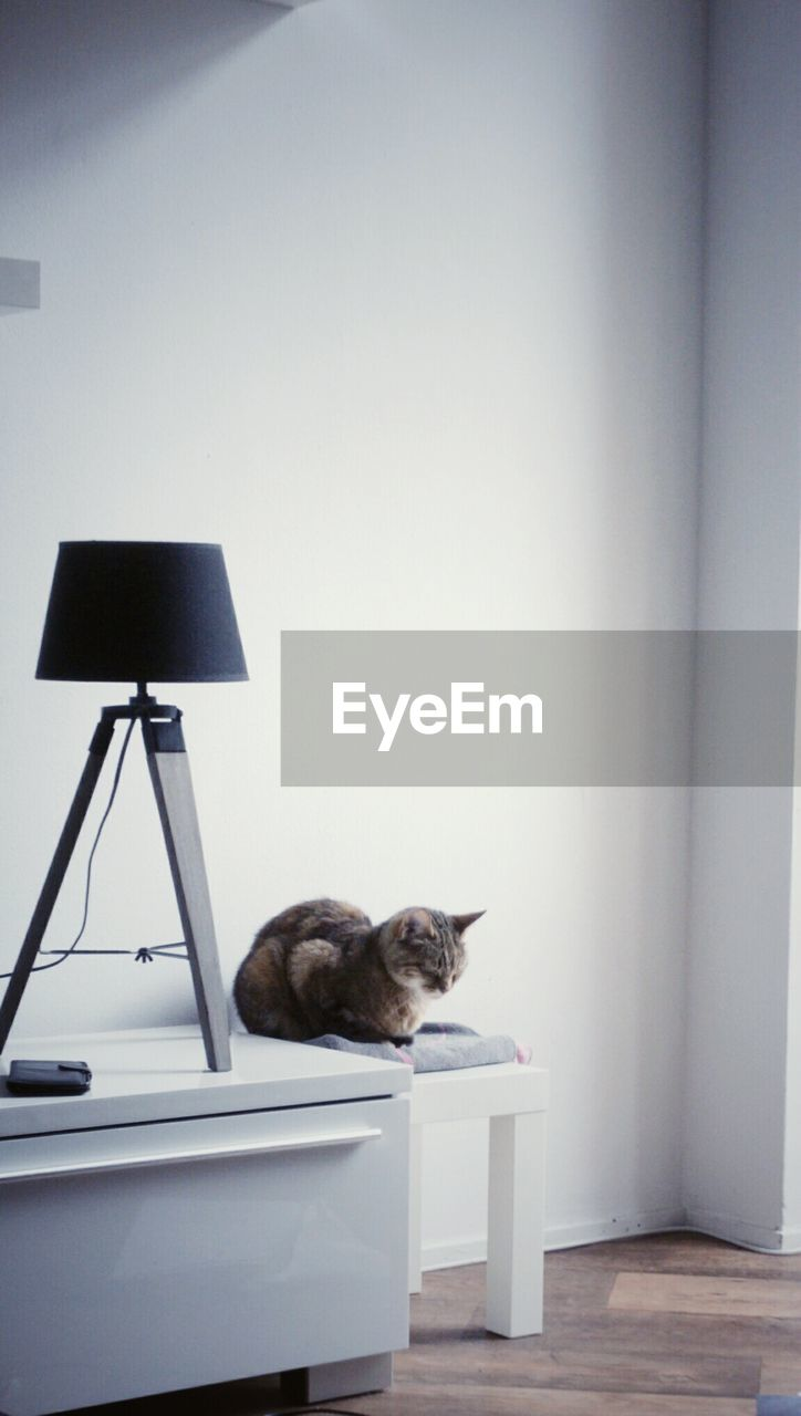 Cat On Seat By Lamp At Home