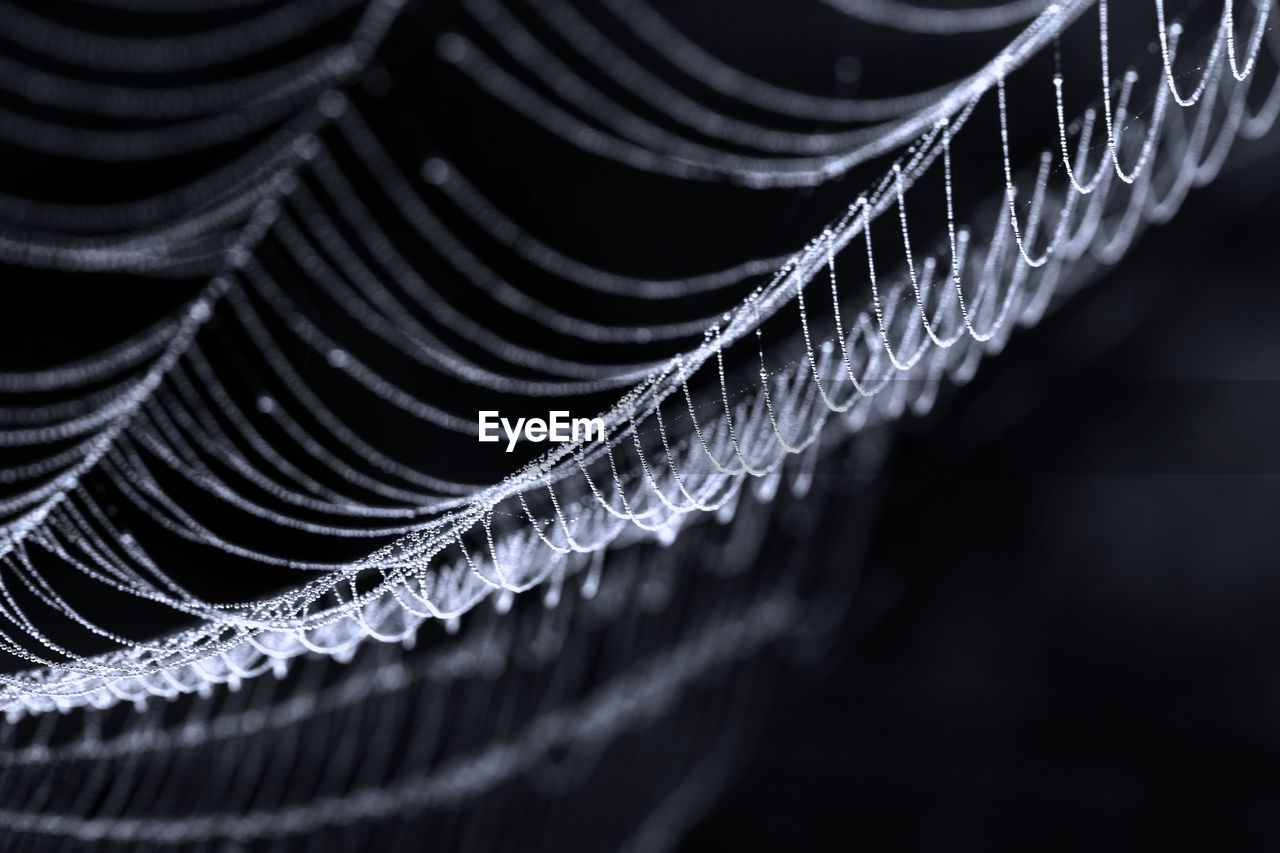 Close-Up Of Spider Web On Black Background