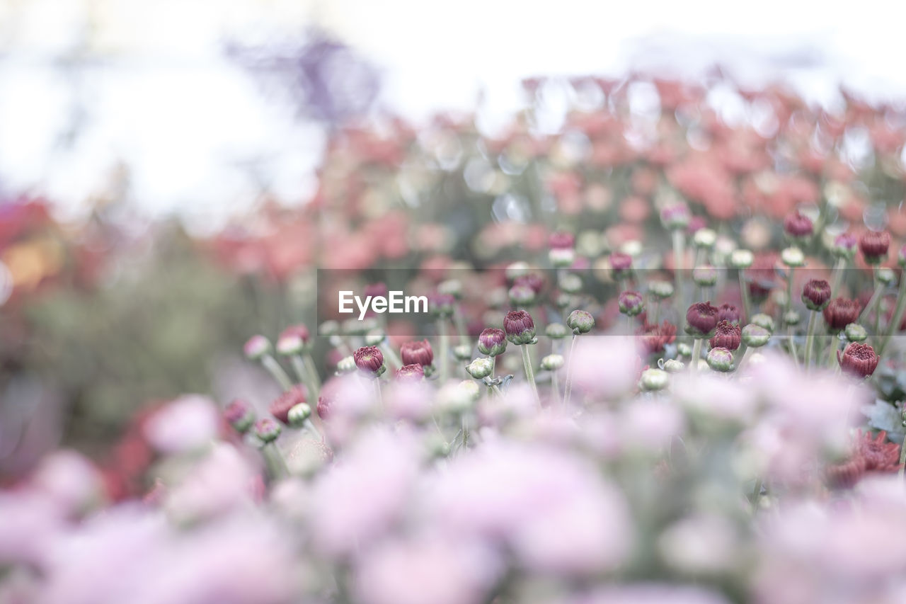 selective focus, nature, beauty in nature, flower, no people, day, outdoors, plant, fragility, freshness, close-up, tree, sky