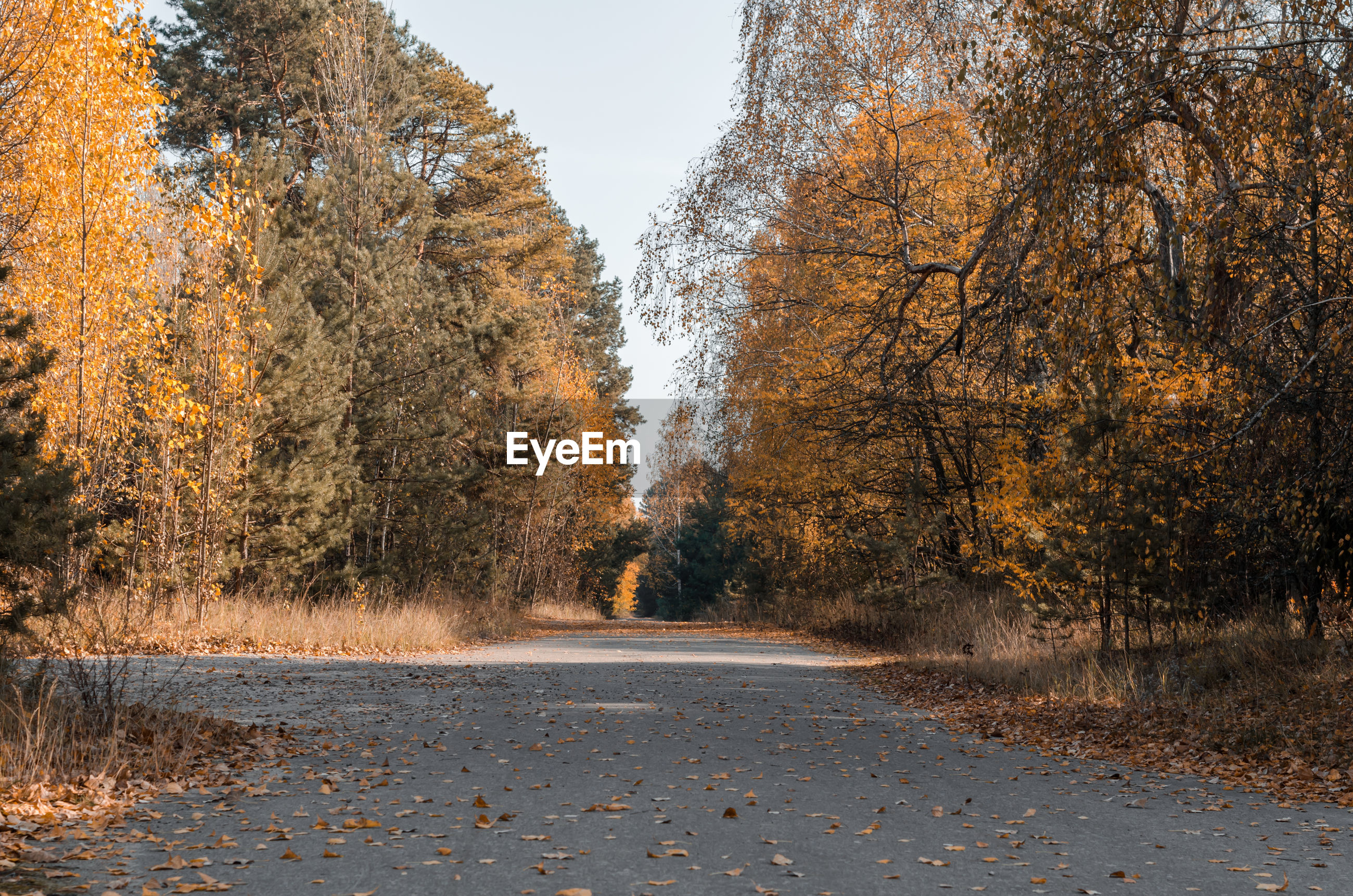 VIEW OF ROAD AMIDST TREES DURING AUTUMN