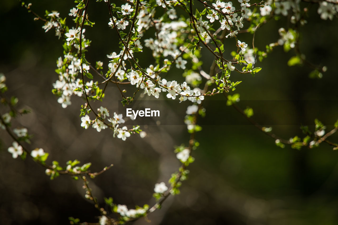 plant, growth, beauty in nature, tree, freshness, day, no people, nature, branch, fragility, vulnerability, close-up, outdoors, selective focus, plant part, focus on foreground, leaf, flowering plant, flower, tranquility