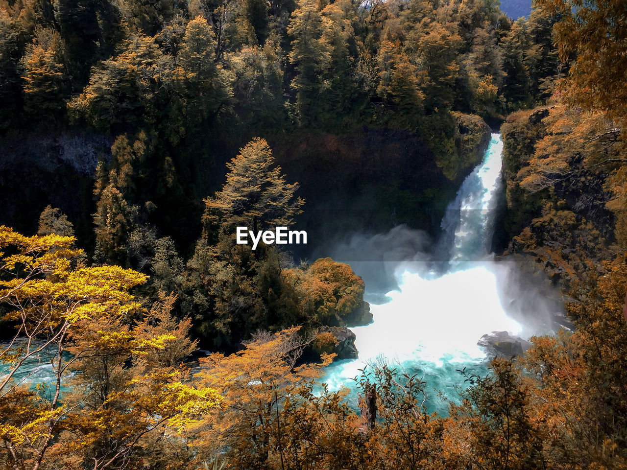 tree, beauty in nature, plant, scenics - nature, autumn, forest, growth, water, change, nature, no people, non-urban scene, land, motion, waterfall, rock, day, tranquility, tranquil scene, outdoors, flowing water, power in nature, flowing, rainforest