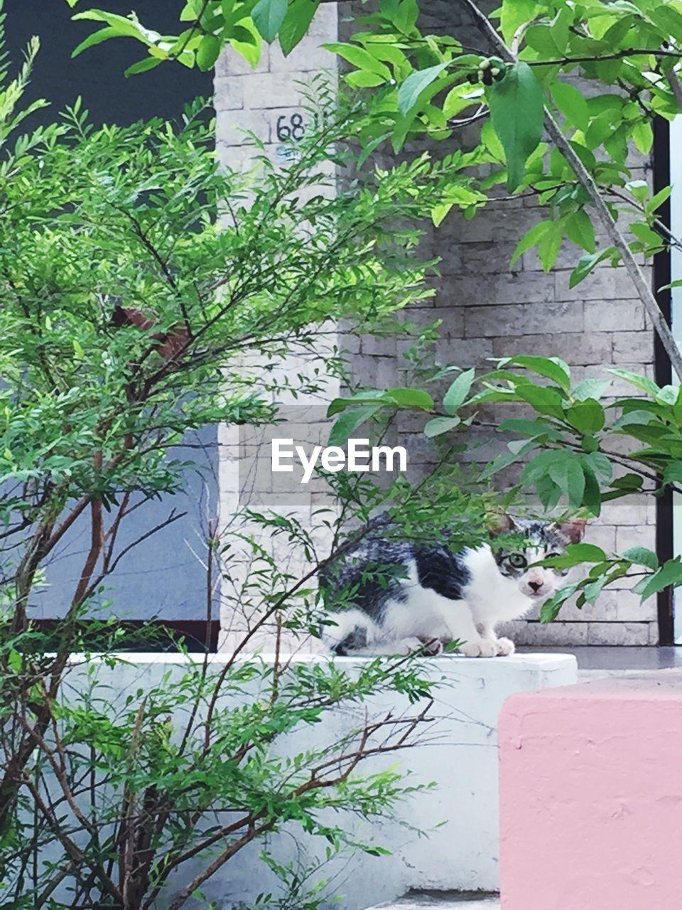 Portrait of cat hiding by tree