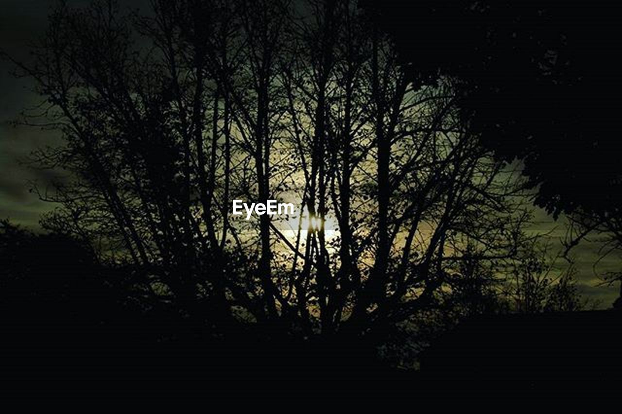 tree, silhouette, no people, outdoors, nature, night