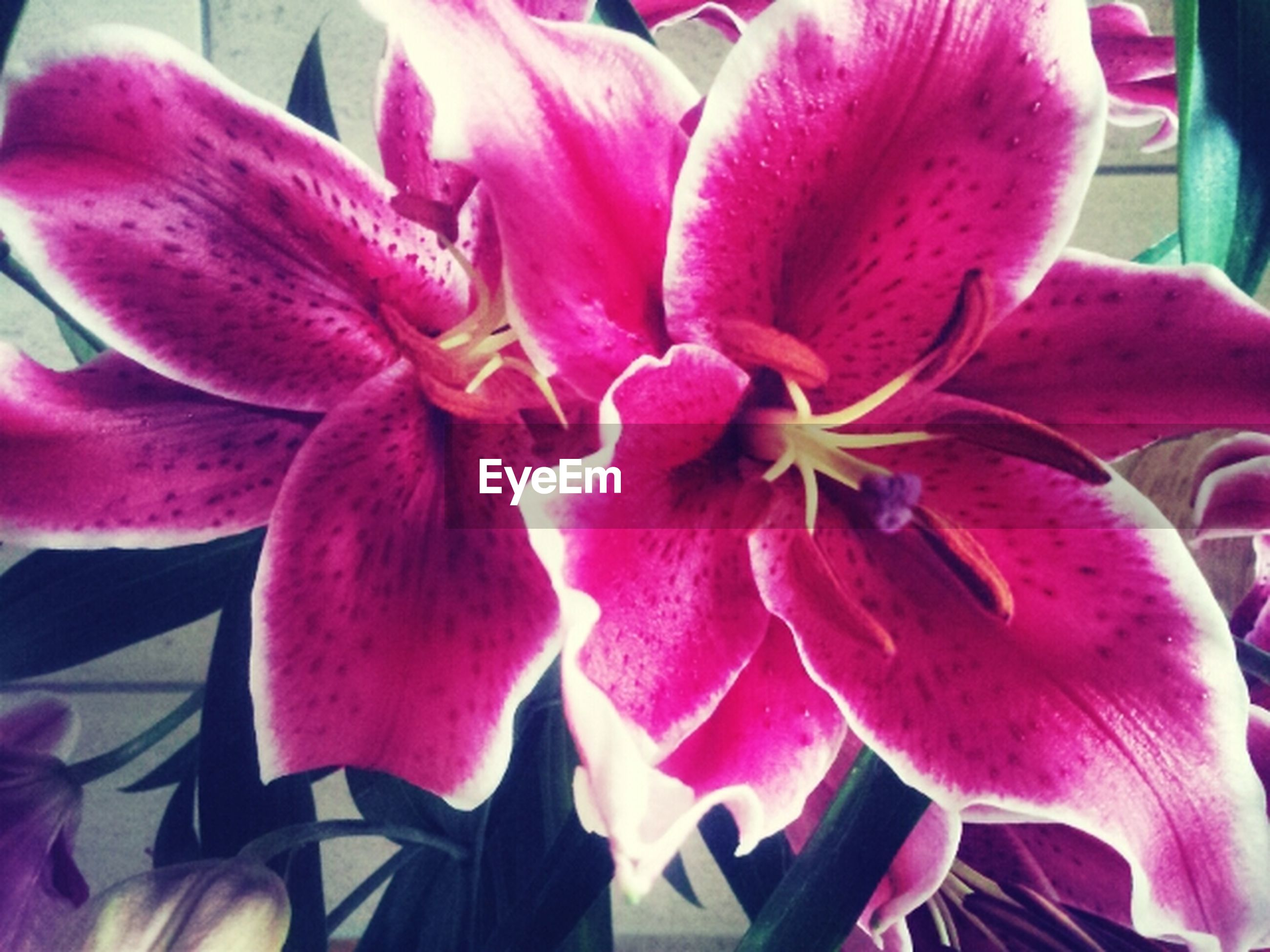flower, petal, freshness, flower head, fragility, pink color, growth, close-up, beauty in nature, nature, blooming, stamen, pollen, plant, in bloom, pink, orchid, focus on foreground, no people, day