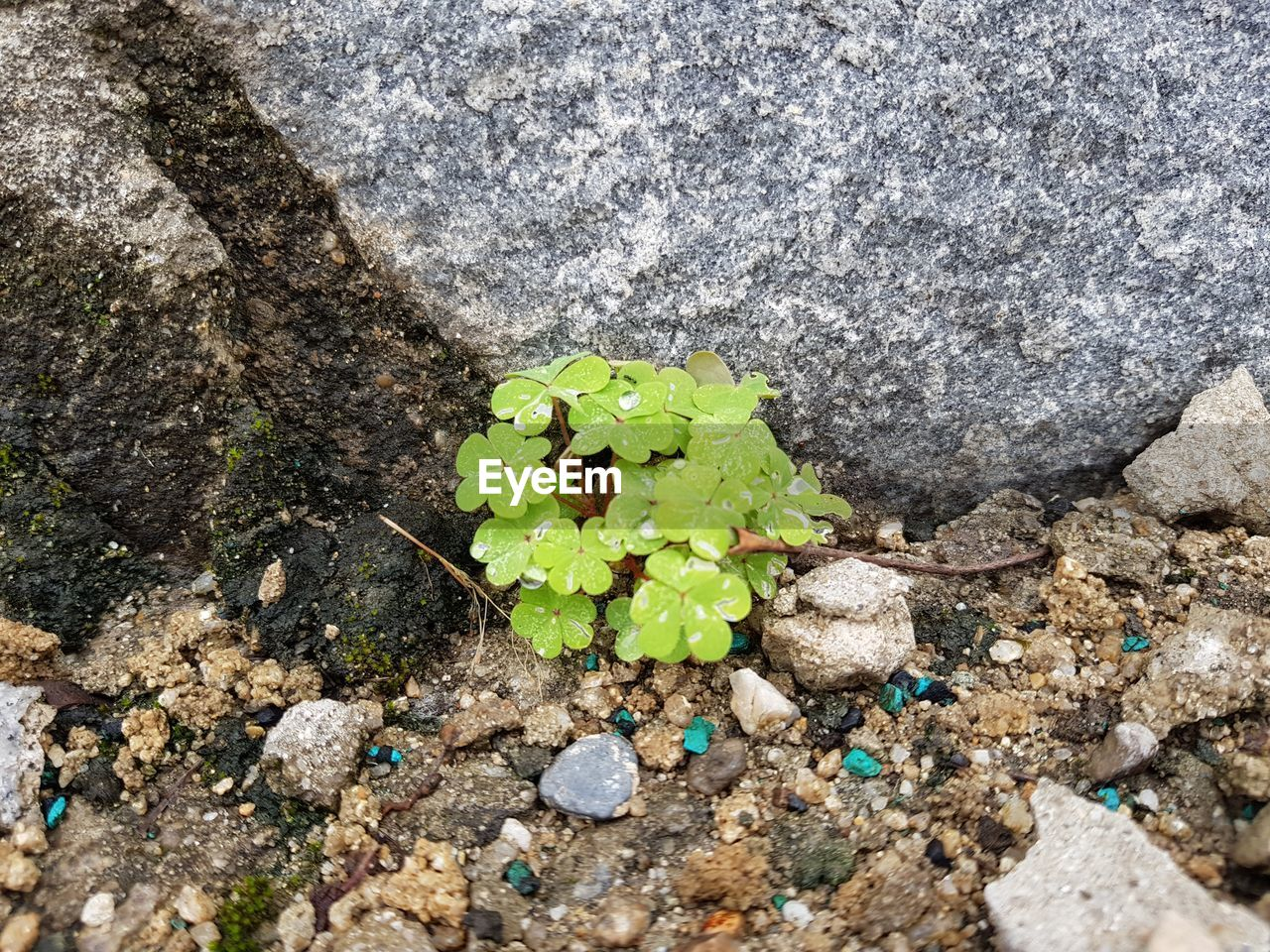 rock - object, high angle view, no people, green color, day, nature, outdoors, close-up, leaf, fragility