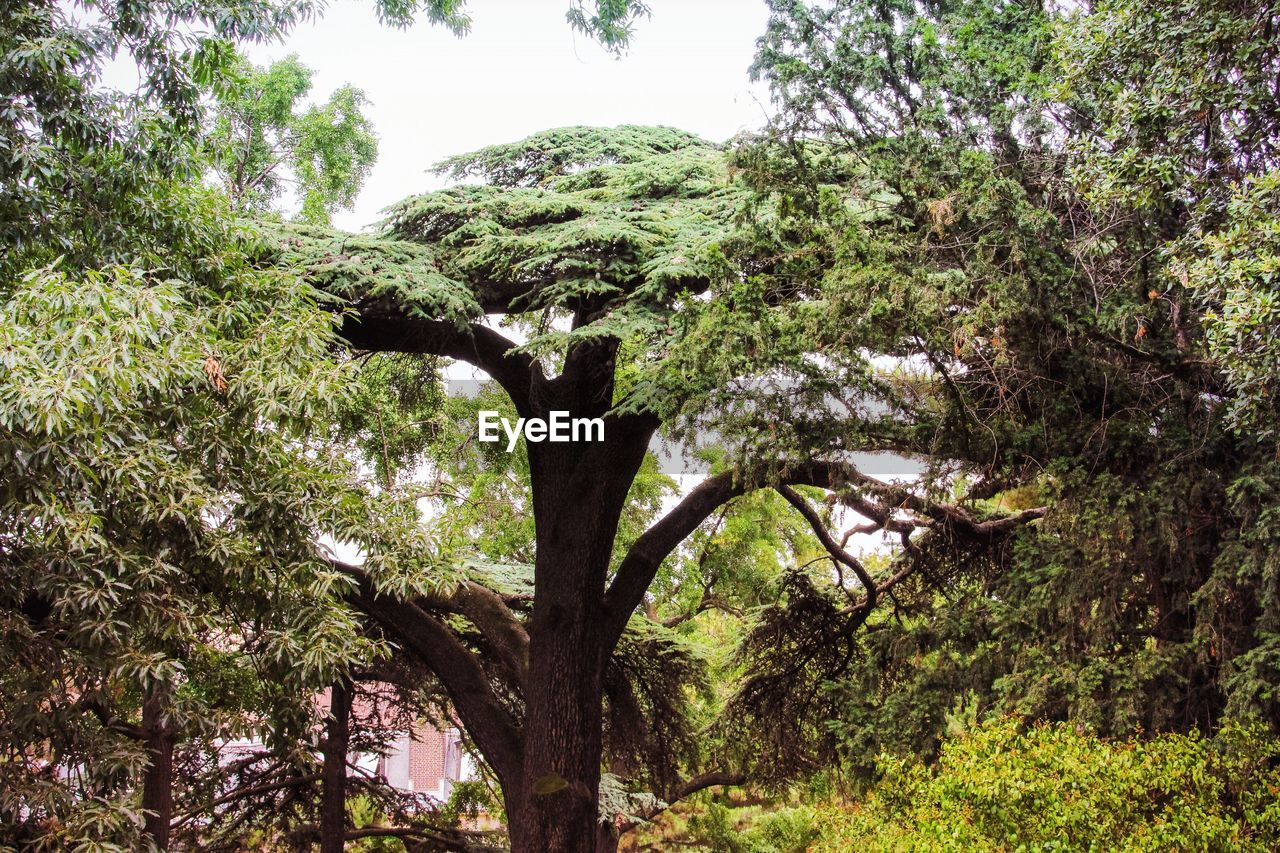 tree, nature, growth, branch, forest, day, no people, outdoors